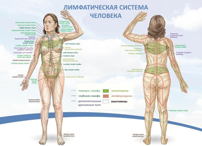 Дренажный массаж тела щеткой с натуральной щетиной