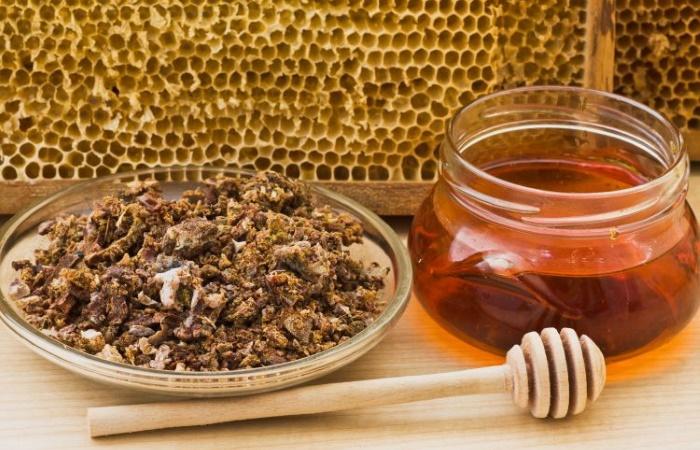Продукты пчел - сильные природные антибиотики