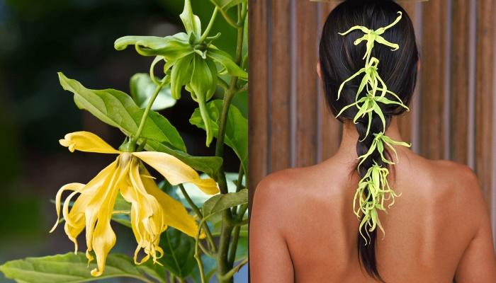 Лучшие эфирные масла для сухих волос - №3 иланг-иланг